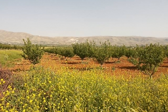 dreams-land-محمية الاحلام مساحة 280000 متر مربع.